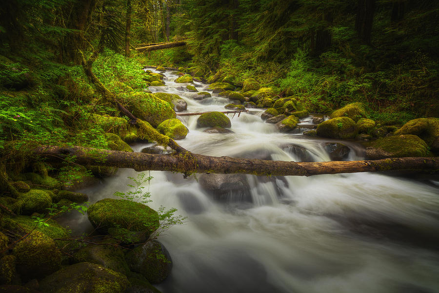 Water Photograph - Waters Of Larch Mountain by Stuart Deacon