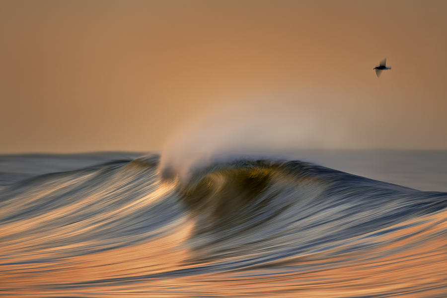 Wave and Bird  MG_6854DN by David Orias