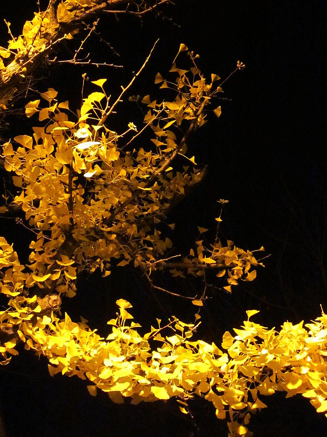 Leaves Photograph - Wave Of Yellow by Guy Ricketts