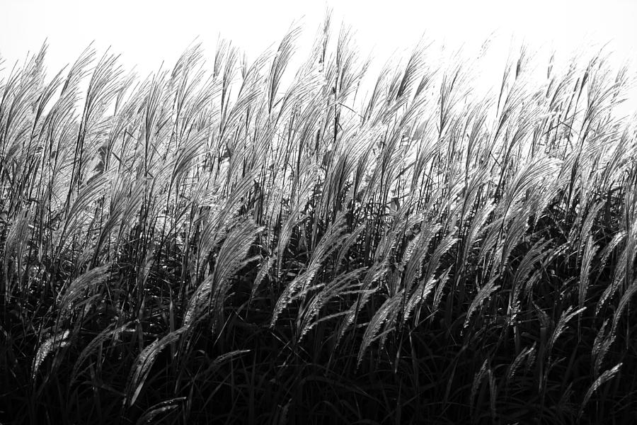 Waves of Grass by Rural America Scenics