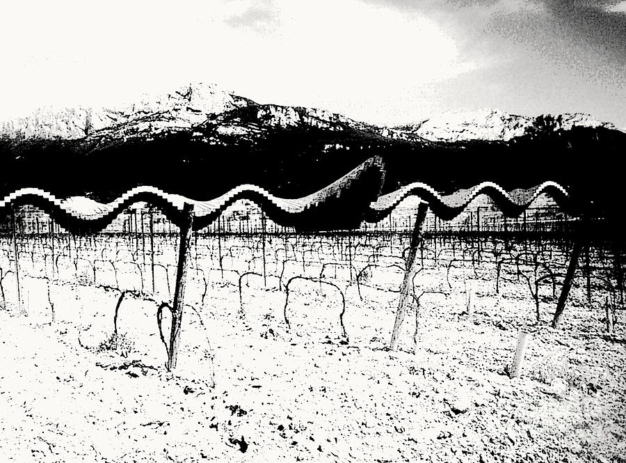 Wine Photograph - Waves On The Winery by Enrique Collado