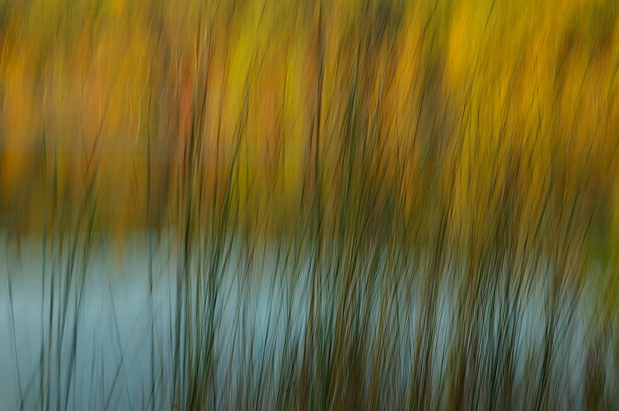 Tall Grass Photograph - Wavy by Randy Pollard