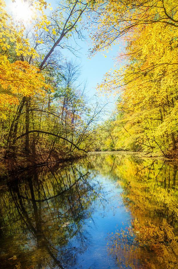 Fall Photograph - Waxen Autumn 1  by Susan McMenamin