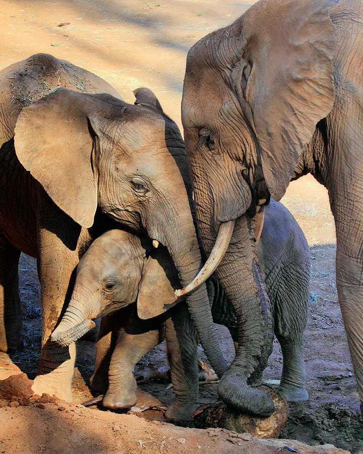 Elephant Photograph - We Are Family by Ann Van Breemen