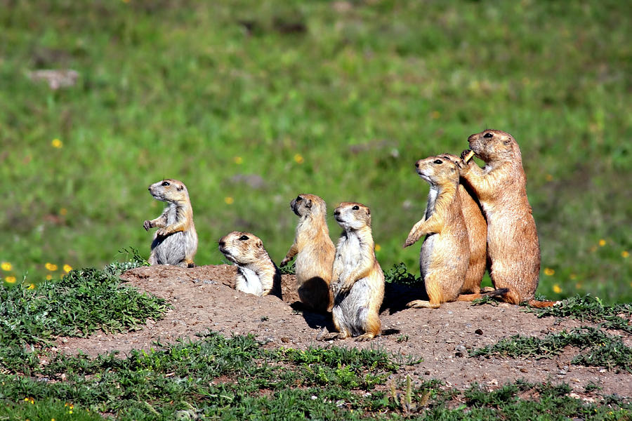 Animal Photograph - We Are Family by Lana Trussell