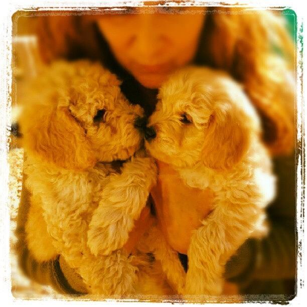 Adorable Photograph - Two Adorable Puppies by Blenda Studio