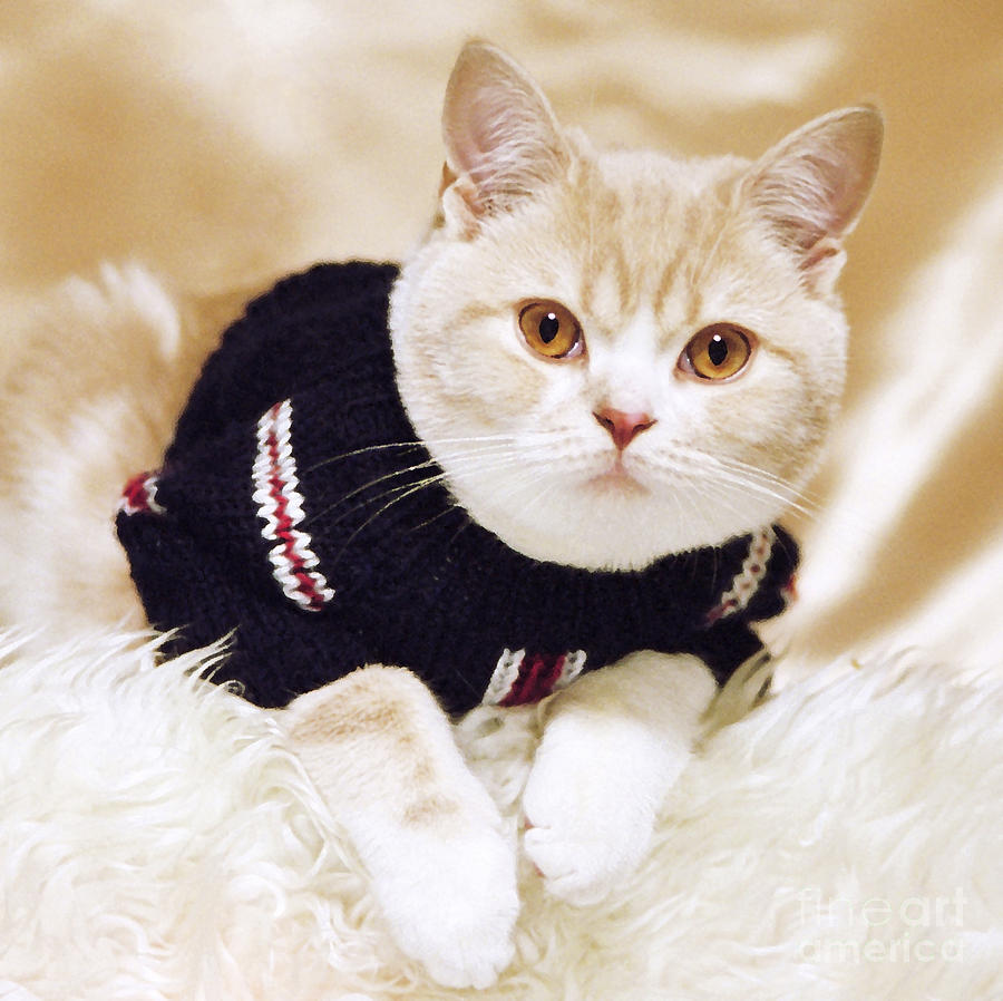 Cat Photograph - Wearing A Sweater by Aiolos Greek Collections