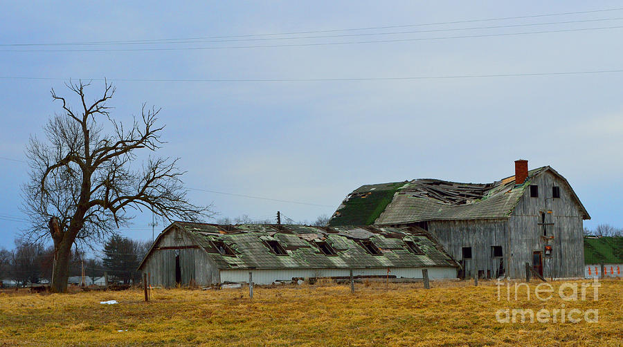 Barns Photograph - Weathered Barns by Alys Caviness-Gober