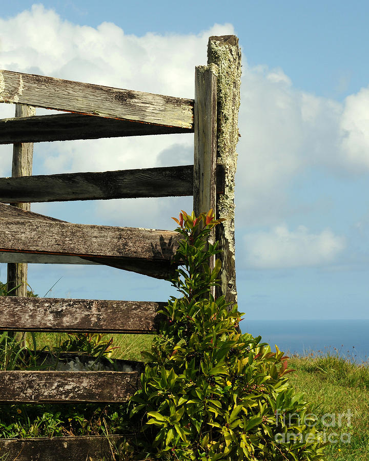 Weathered Fence Photograph - Weathered Fence by Vivian Christopher
