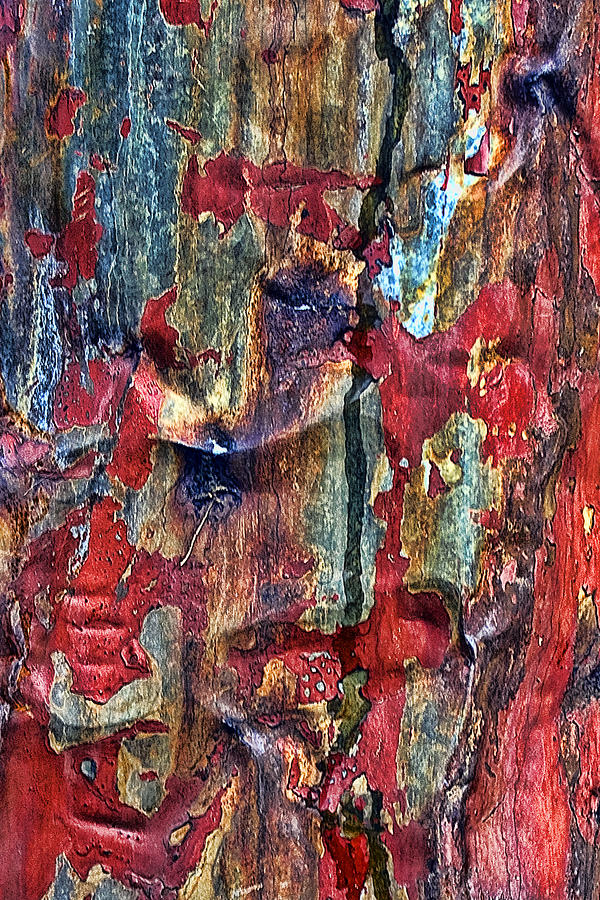 Abstract Photograph - Weathered by Marcia Colelli