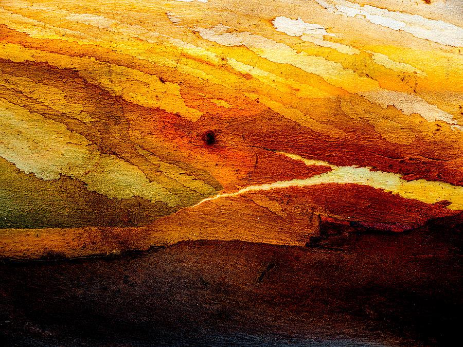 Weathered Wood Landscape Photograph