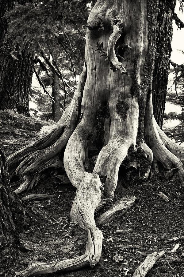 Bark Photograph - Weatherworn by Jayme Spoolstra