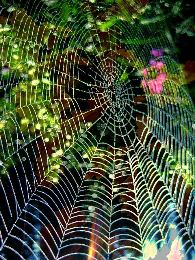 Web Photograph - Web Of Entanglement by Shirley Sirois
