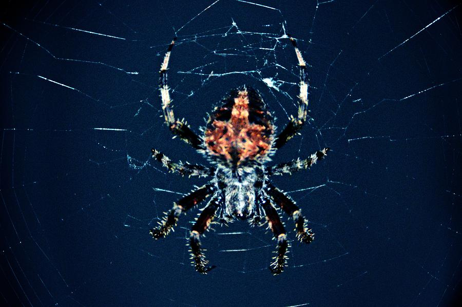 Spider Photograph - Webbed Up by David Earl Johnson