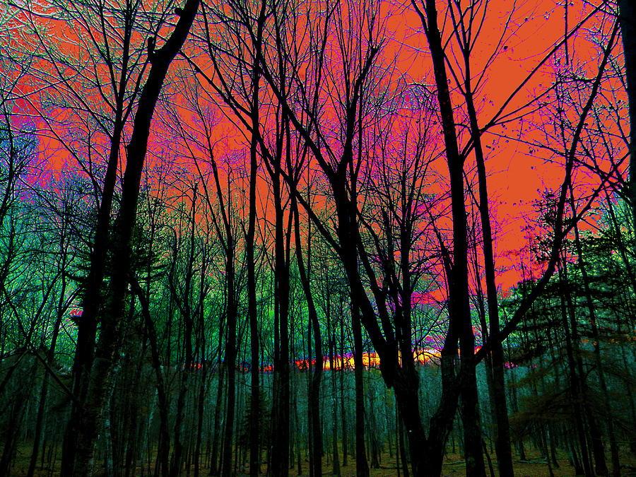 Webbs Woods Sunset Photograph