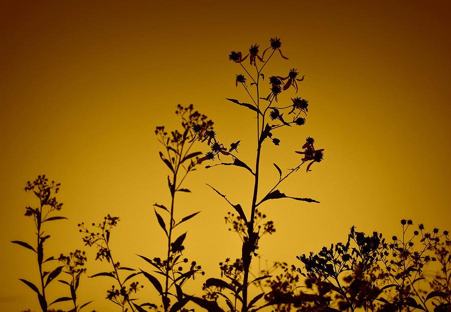 Nature Photograph - Weeds by Alicia Romano