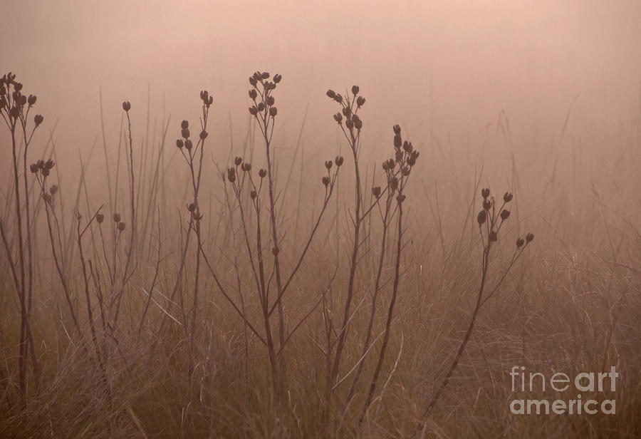 Foggy Photograph - Weeds In The Fog by Roy Thoman
