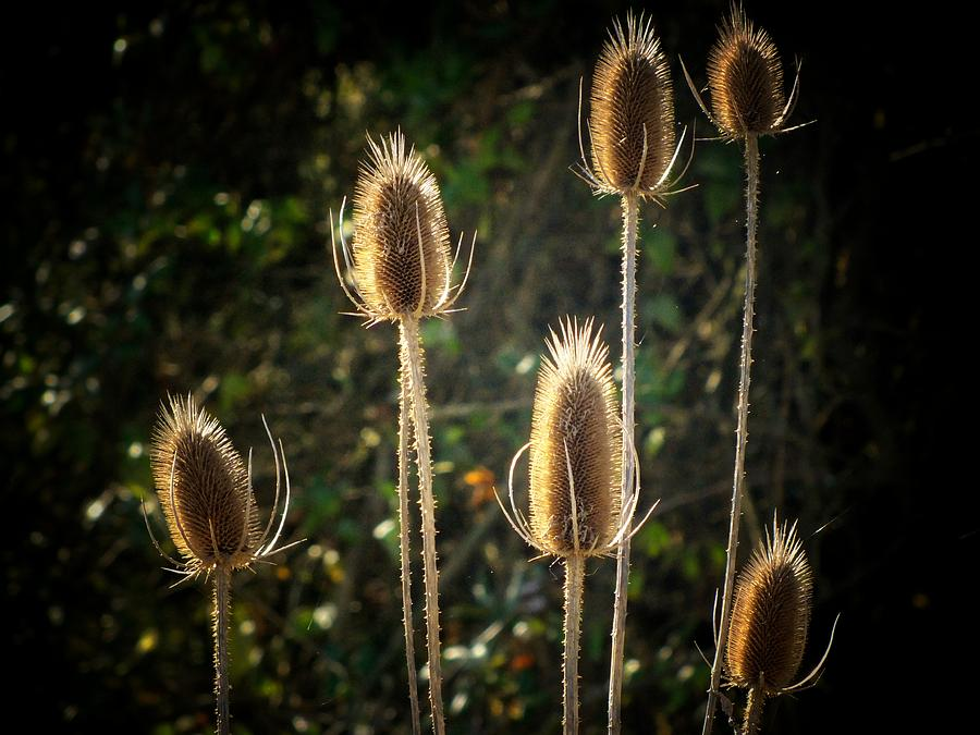 Weeds Photograph - Weeds by Michael L Kimble