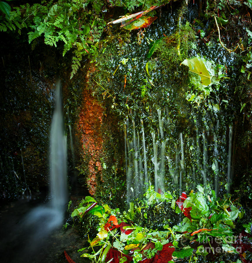 Weeping Flow by Wayne Stacy