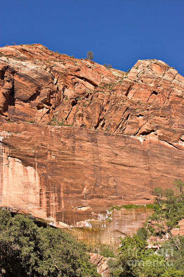 Travel Photograph - Weeping Rock In Zion National Park by Louise Heusinkveld