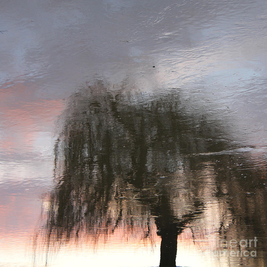 Weeping Willow Photograph - Weeping Willow by Karin Ubeleis-Jones