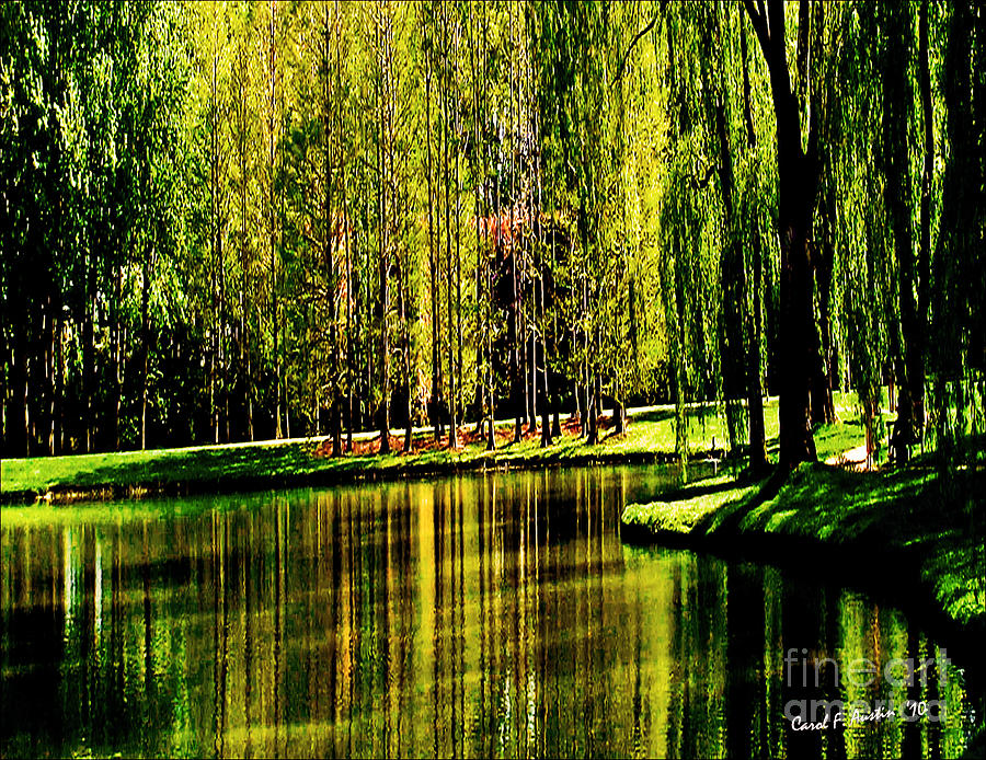 Weeping Willow Tree On Lakeside Photograph By Carol F Austin