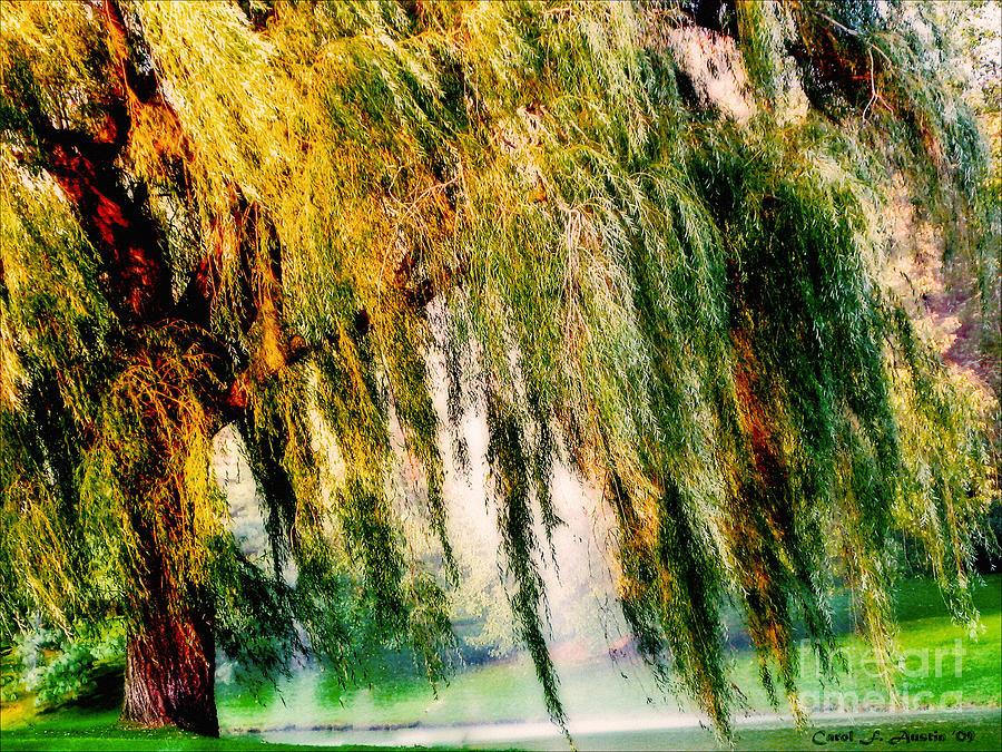 Weeping Willow Tree Meditation Wall Art Print Photograph by Carol F ...