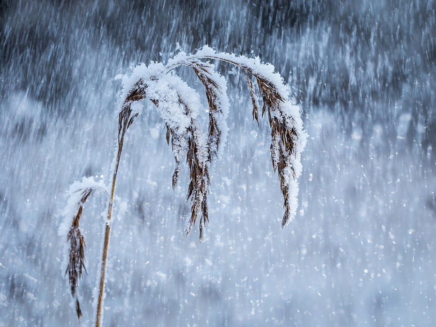Finland Photograph - Weight Of Winter by Janne Mankinen