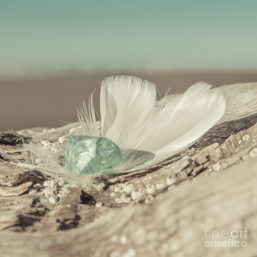 White Photograph - Weighted Feathers by Lucid Mood