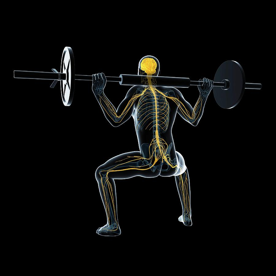 Male Photograph - Weightlifter by Sciepro/science Photo Library