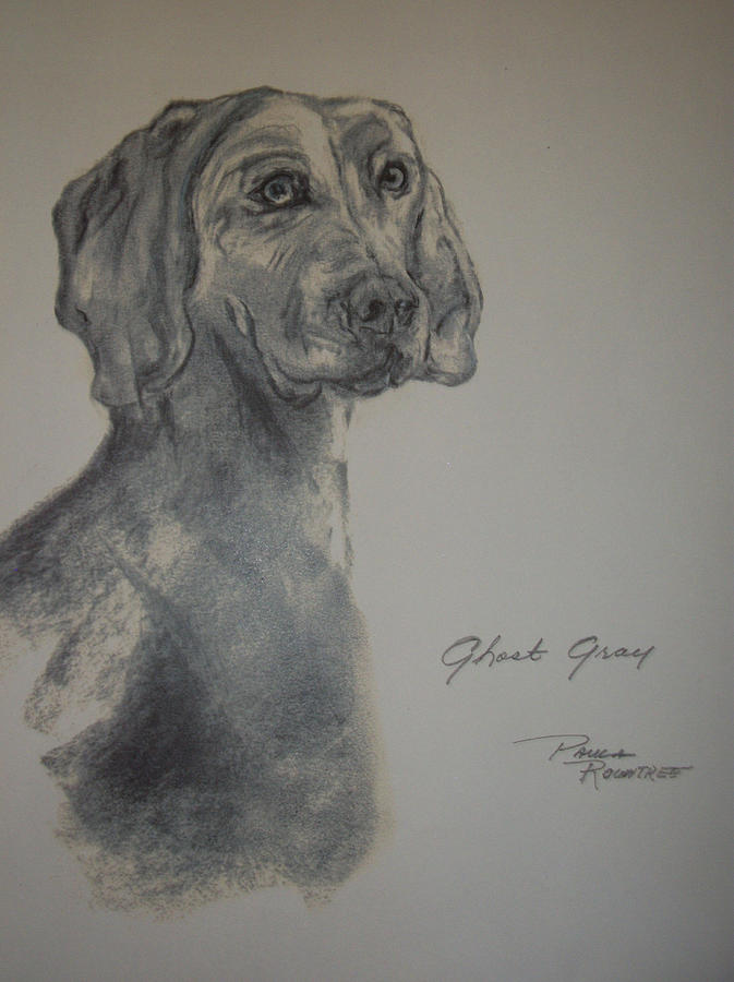 Dog Drawing - Weimaraner by Paula Rountree Bischoff