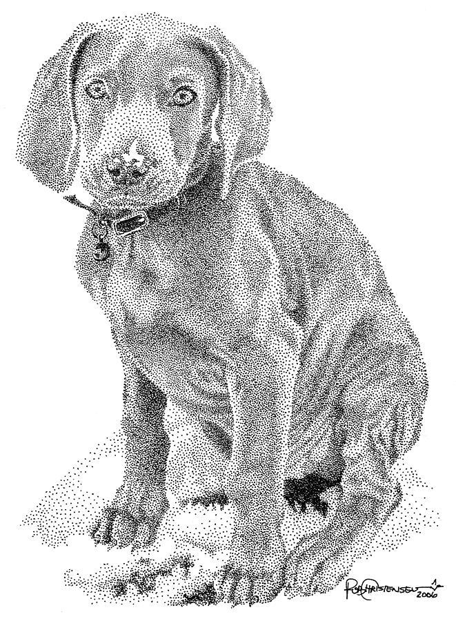 Dog Drawing - Weimaraner by Rob Christensen
