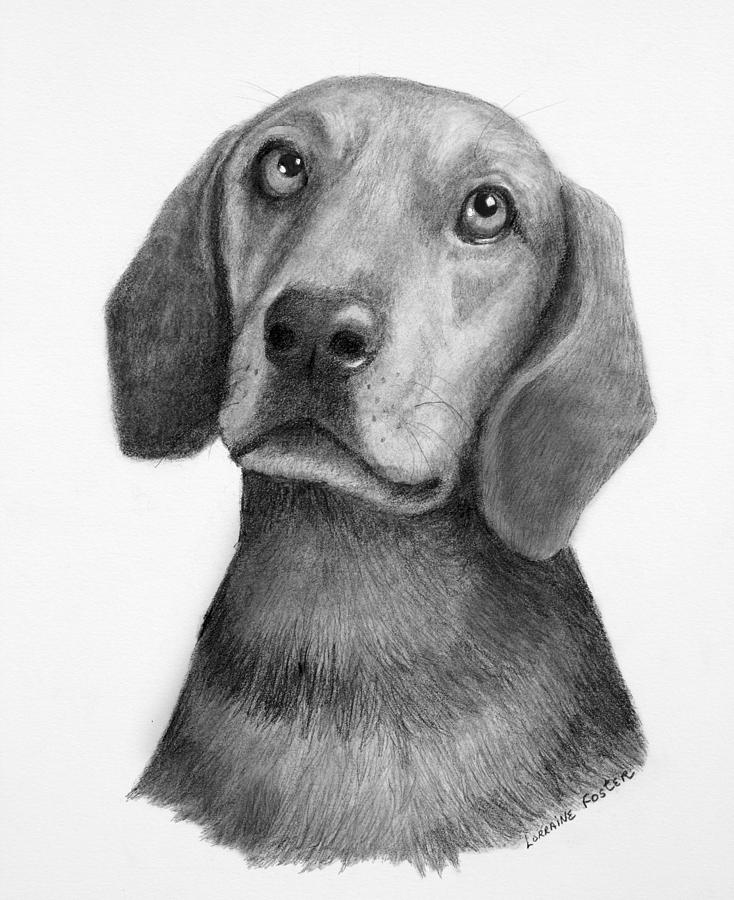 Dogs Drawing - Weiner Dog by Lorraine Foster