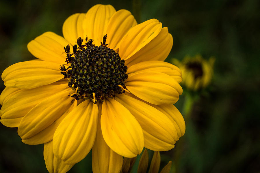 Wildflowers Photograph - Welcome Fall by Julie Andel