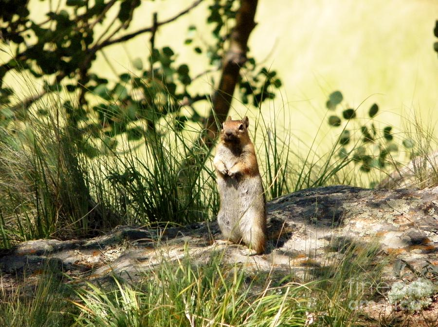 Chipmunk Photograph - Welcome by Michelle Bentham