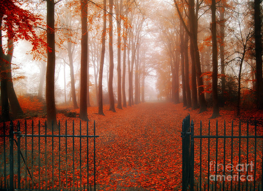 Landscape Photograph - Welcome by Jacky Gerritsen
