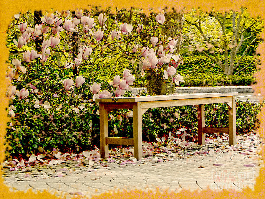 Bench Photograph - Welcome Spring by Carol F Austin