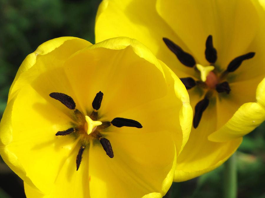 Flowers Photograph - Welcome Spring by Lori Frisch