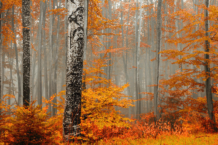 Mist Photograph - Welcome To Orange Forest by Evgeni Dinev