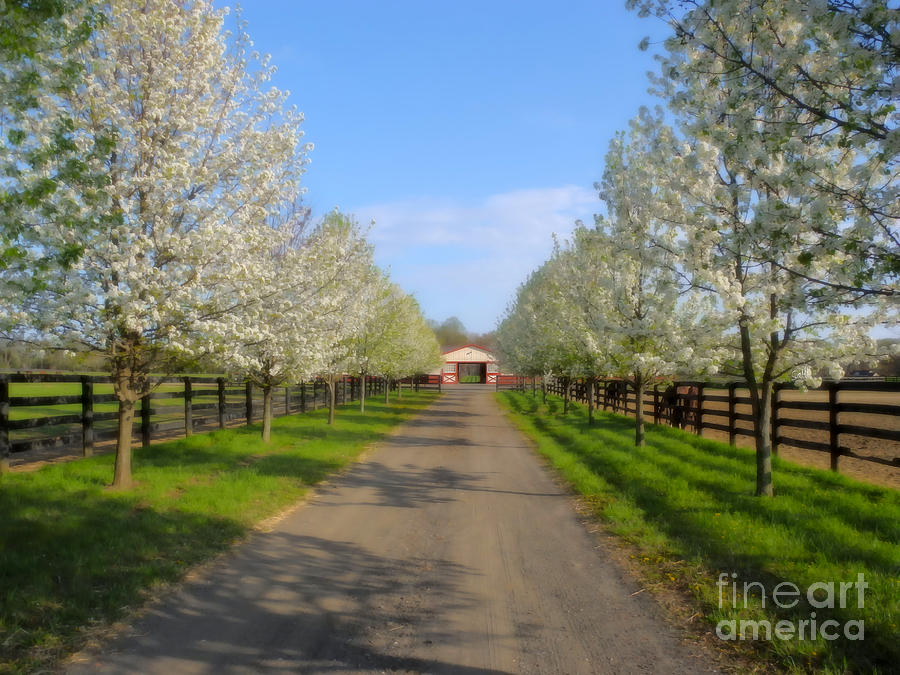 Landscape Photograph - Welcome To The Farm by Sami Martin