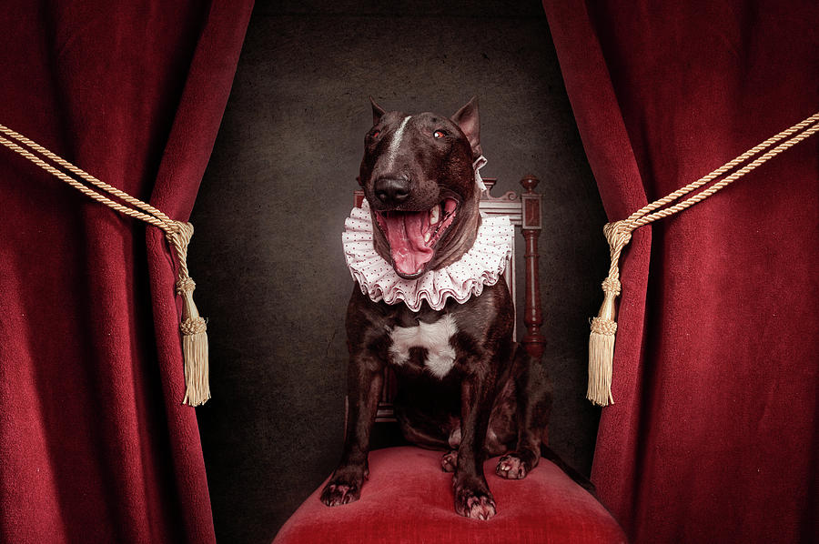 Dogs Photograph - Welcome To The Show by Heike Willers