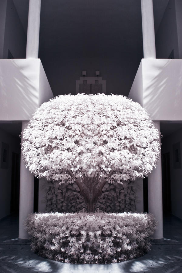 3scape Photos Photograph - Welcome Tree Infrared by Adam Romanowicz
