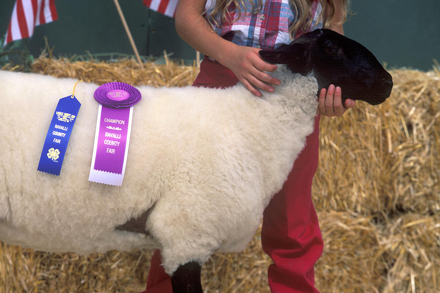 Lamb Photograph - Well Done by Jim Cotton