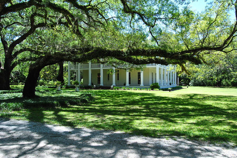 Landscape Photograph - Wesley House And The Oak by Michele Kaiser