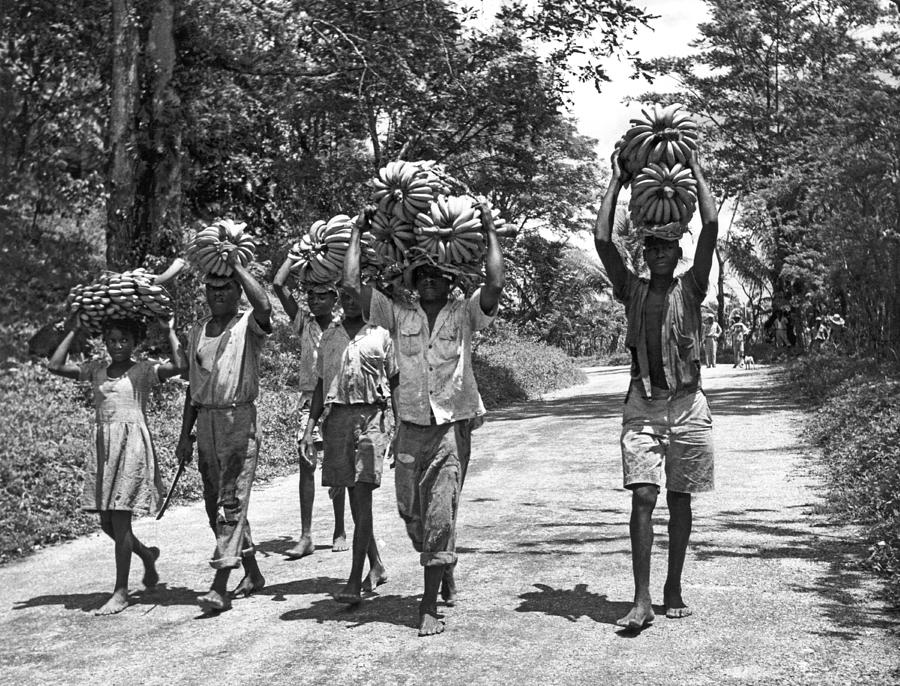1956 Photograph - West Indies Banana Harvest by Underwood Archives