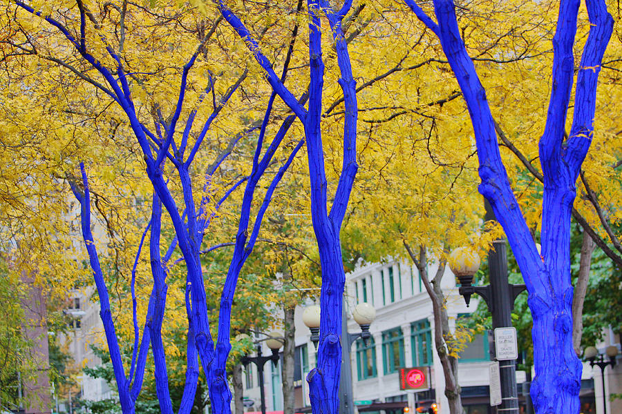 Blue Trees Yellow Leaves Down Town Seattle Old Street Lights Westlake Seattle Photograph - West Lake Park by Donald Torgerson