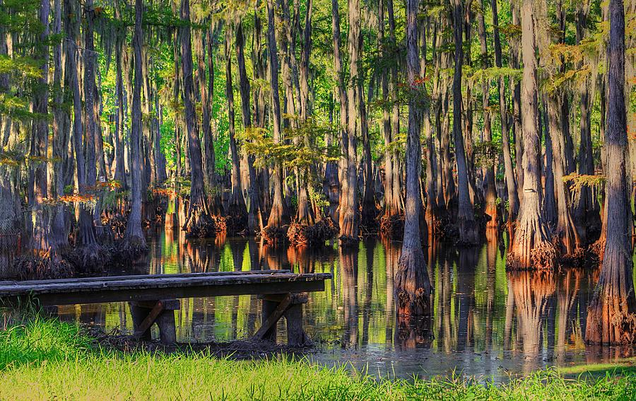 Swamp Photograph - West Monroe Swamp Dock by Ester McGuire