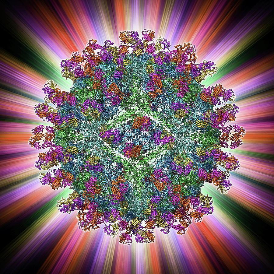 Alpha Helix Photograph - West Nile Virus And Antibodies by Laguna Design
