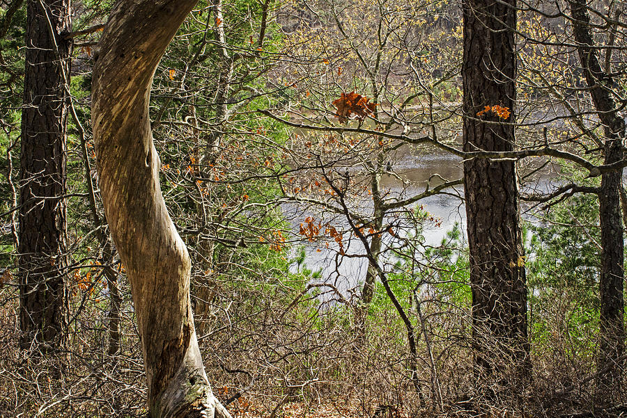 Forest Photograph - West Pond In The Woods by Frank Winters