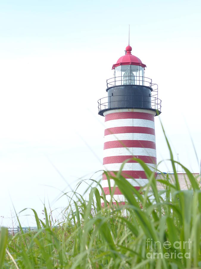 West Quoddy Head Lighthouse Tower from the Field by Christine Stack